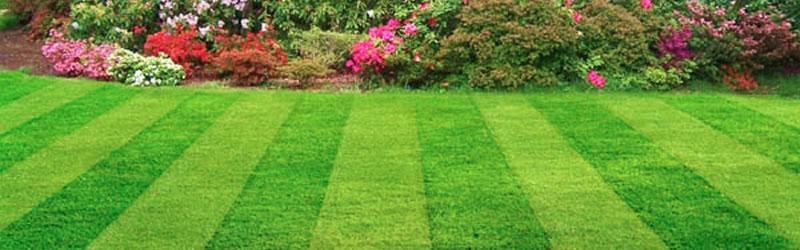 New Lawn Doral