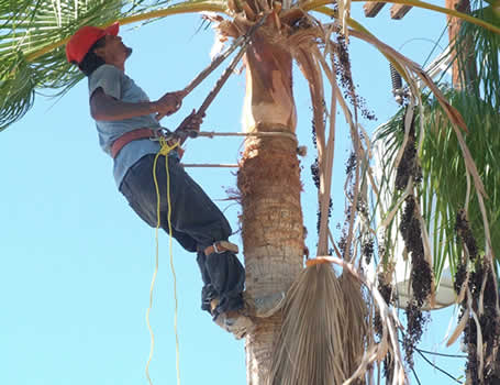 Tree Removal Coconut Creek