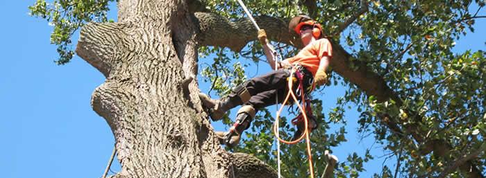 Tree Service Company Miami