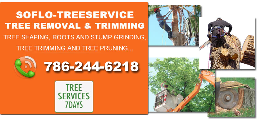 South Florida Tree Service