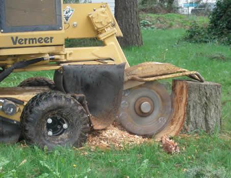 Stump Removal Miami