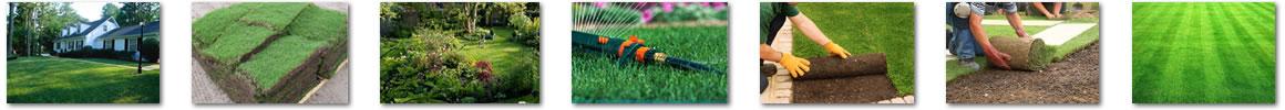 Grass Installation Doral