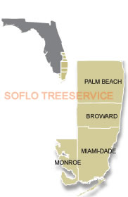 Tree Service South Florida