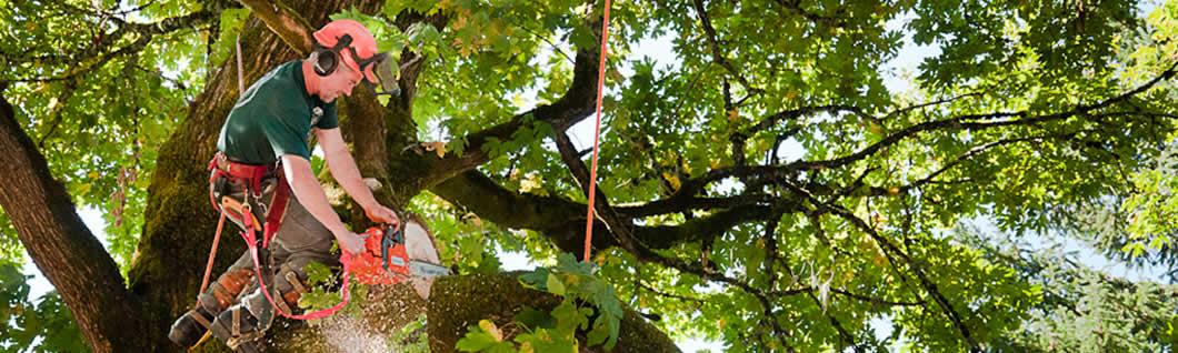 Tree Cutting Miami